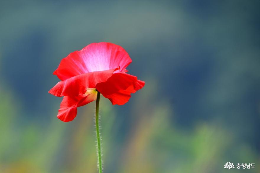 아름다운 꽃이 피어나는 미르섬의 늦봄