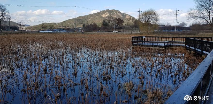연이 자라는 작은 호수