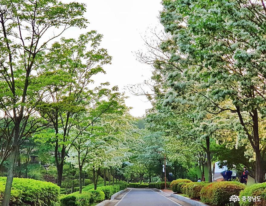 눈꽃비 맞으며 문화생활과 산책을, 예당호조각공원