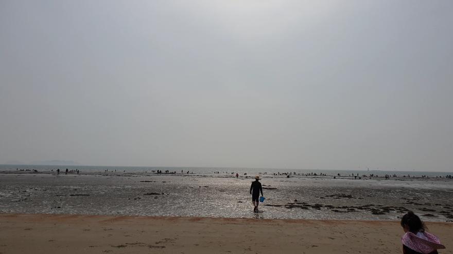 태안 몽산포해수욕장 맛조개 잡기