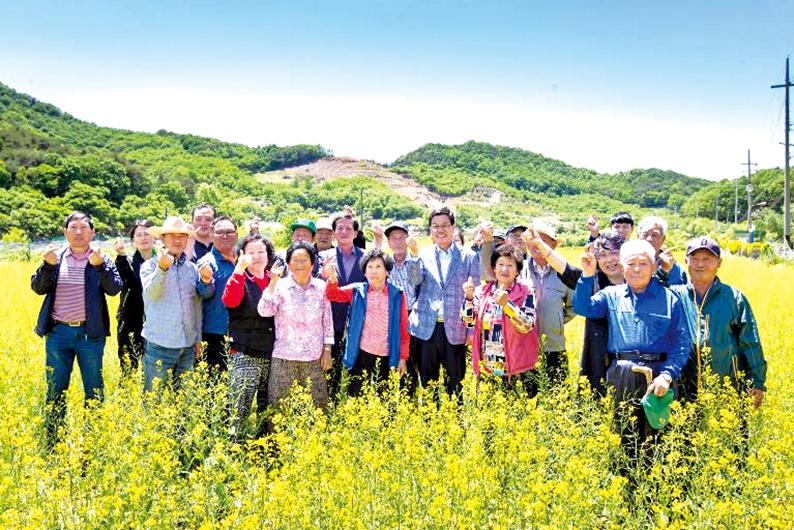 심신 달랜 청양 유채꽃축제