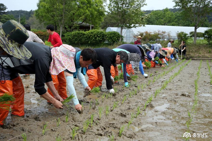 서천군, 고품질 쌀 생산 학습포장 조성… 농업인 이해 돕는다