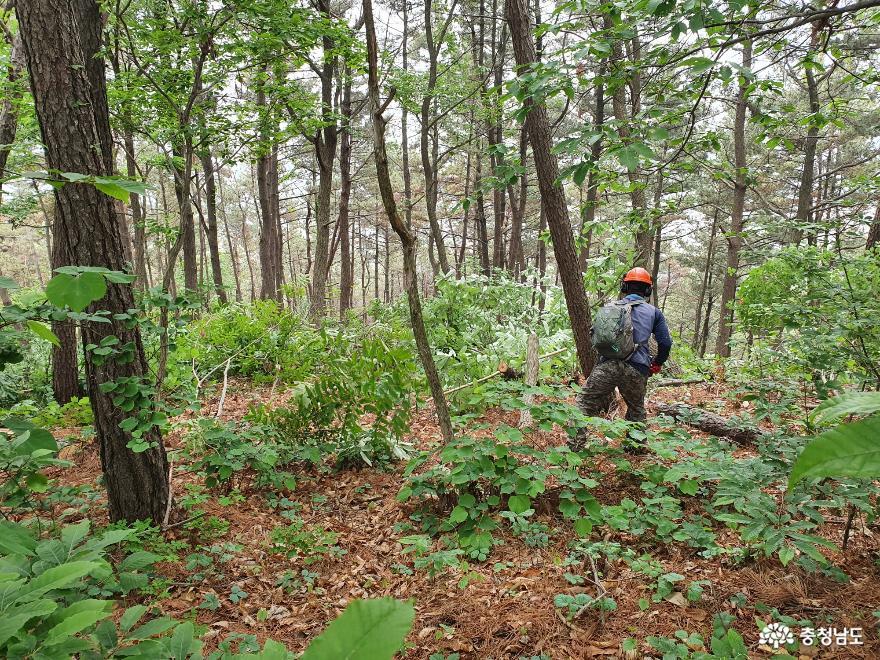 서천군, 맞춤형 숲 가꾸기 사업 추진