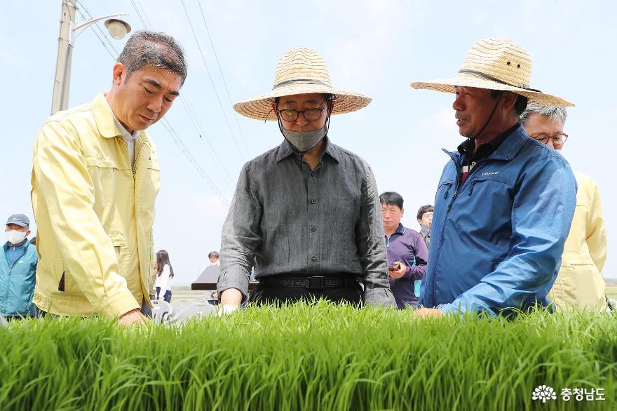 """양승조 지사, 모내기 체험…""""농가소득 증대 노력"""""""
