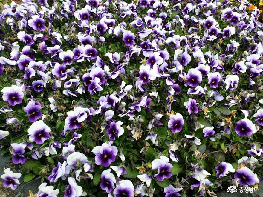 신기한 꽃들이 한가득 '세계꽃식물원'