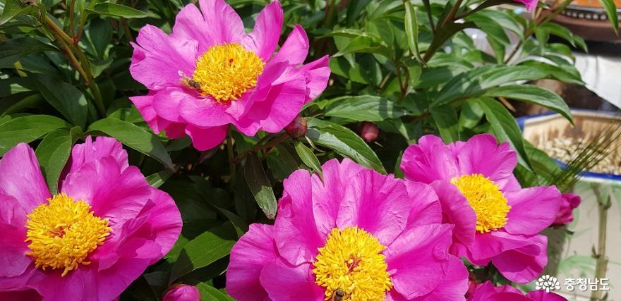 한옥 창호의 꽃살문을 닮은 들꽃의 매력 3
