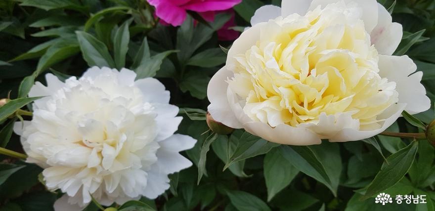 한옥 창호의 꽃살문을 닮은 들꽃의 매력 11
