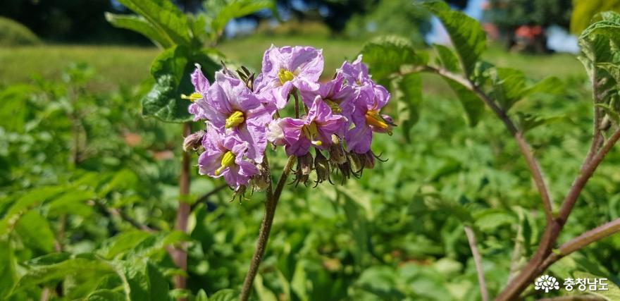 한옥 창호의 꽃살문을 닮은 들꽃의 매력 16