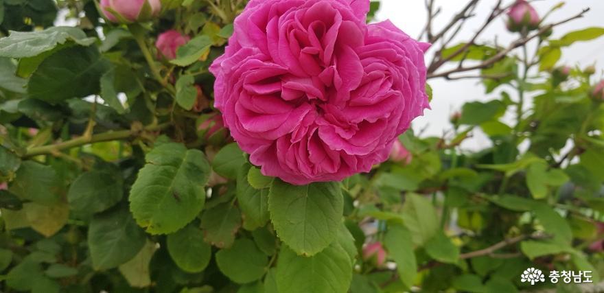 한옥 창호의 꽃살문을 닮은 들꽃의 매력 19