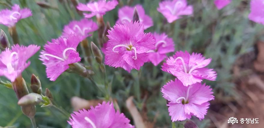 한옥 창호의 꽃살문을 닮은 들꽃의 매력 17