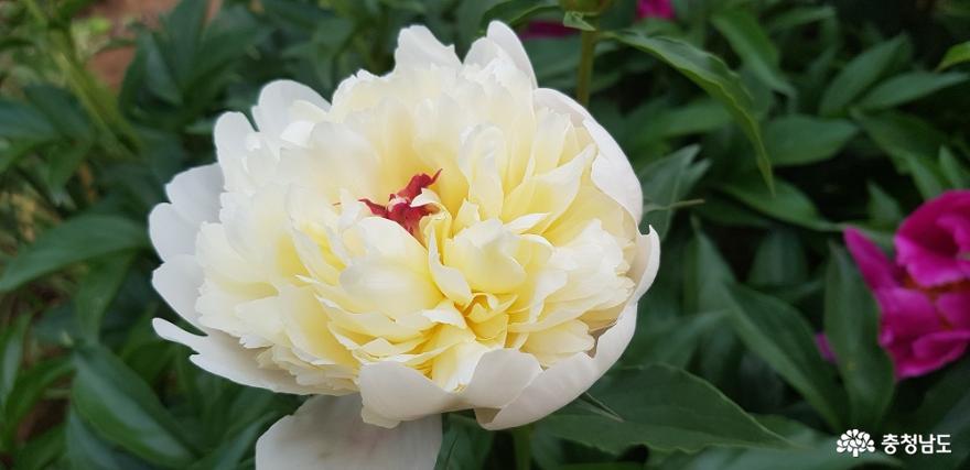 한옥 창호의 꽃살문을 닮은 들꽃의 매력 12