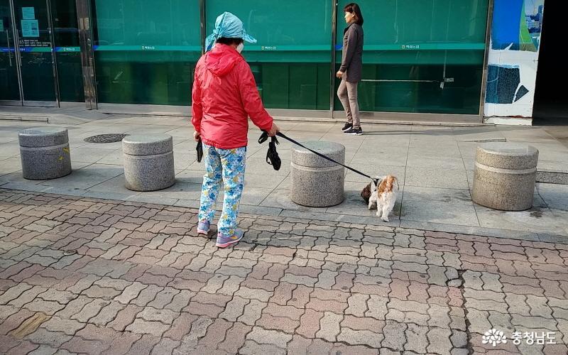 충남도, 성숙한 반려동물 문화 조성을 위한 홍보캠페인 실시 4