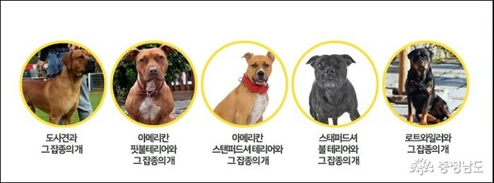 충남도, 성숙한 반려동물 문화 조성을 위한 홍보캠페인 실시 7