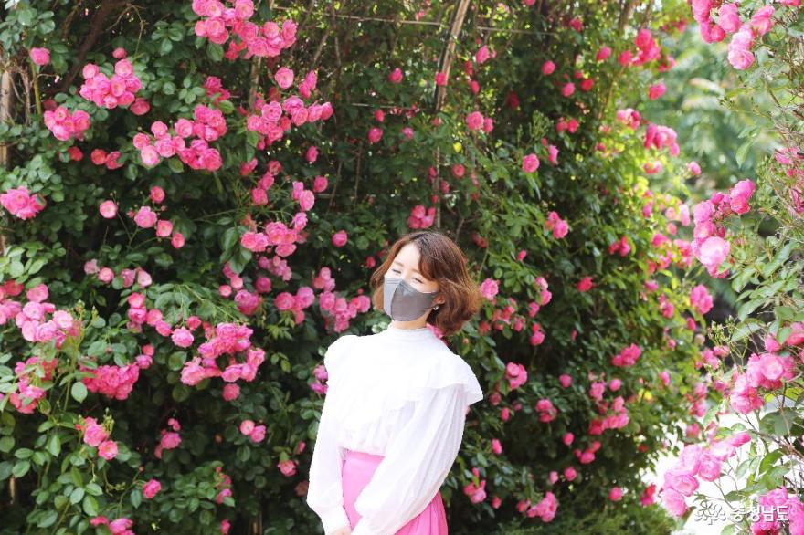꽃의 여왕 장미의 계절에 꼭 들러야 하는 명소 '단대 장미공원'
