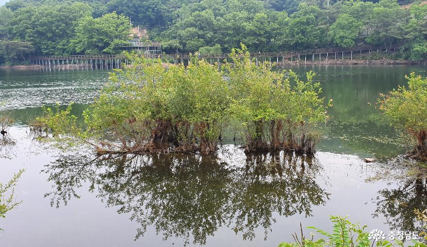 천흥저수지 수변데크 산책로 2.