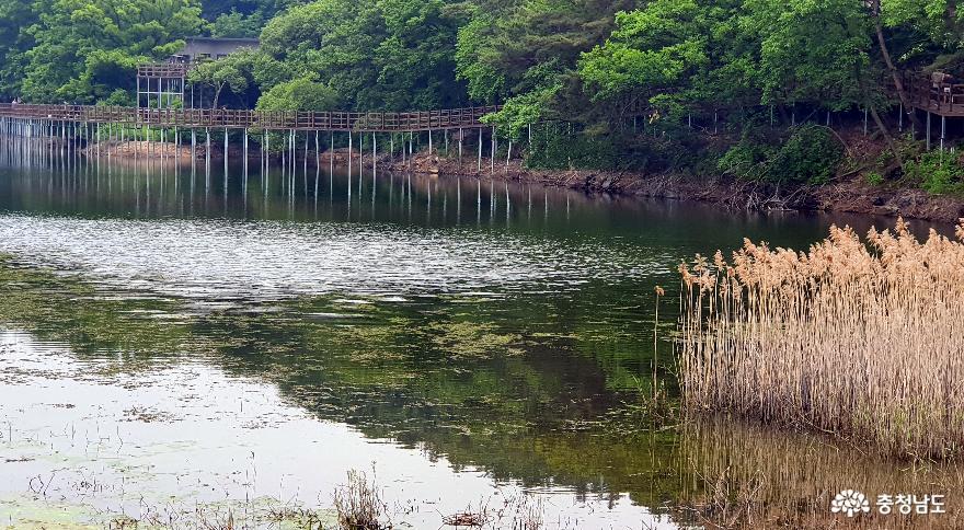 천흥저수지 수변데크 산책로 4.