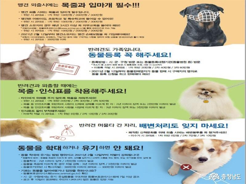 충남도, 성숙한 반려동물 문화 조성을 위한 홍보캠페인 실시 14