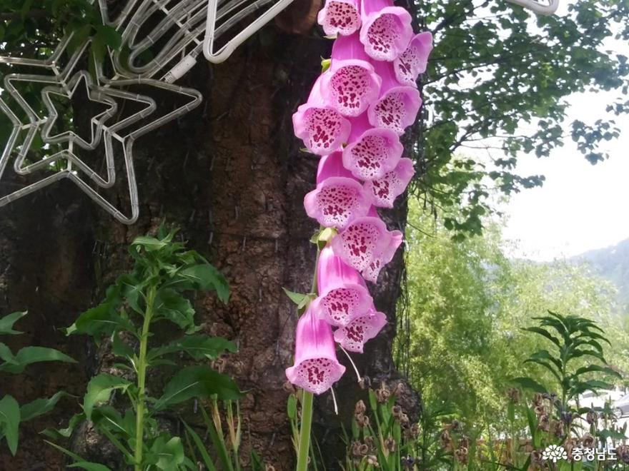 꽃향기 맡으며 가볍게 산책하기 좋은 '아름다운정원 화수목'