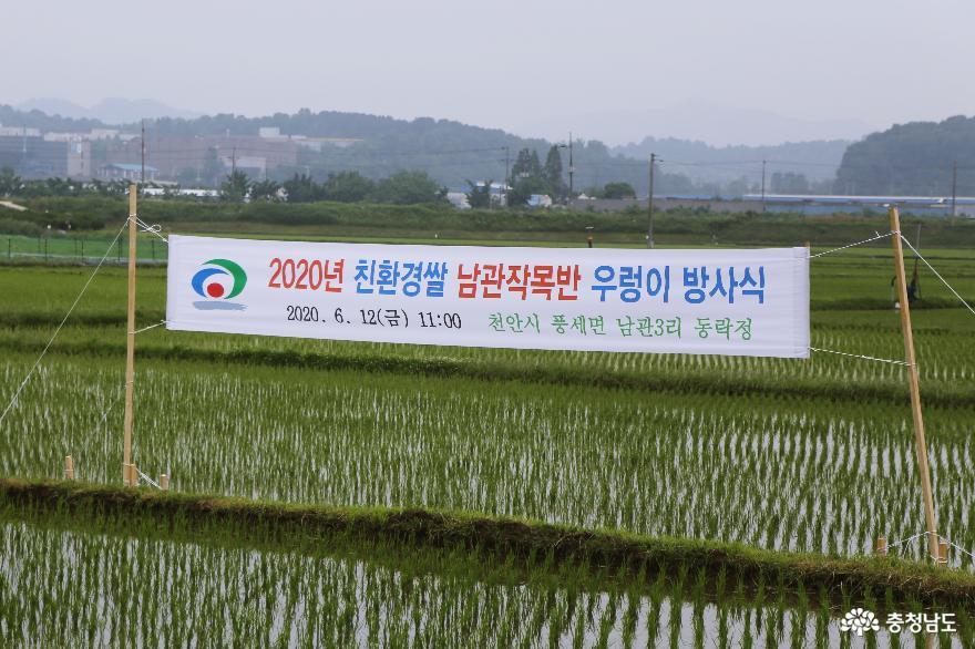 건강한 밥상의 힘, 천안시 2020년 친환경쌀 우렁이 방사식 1