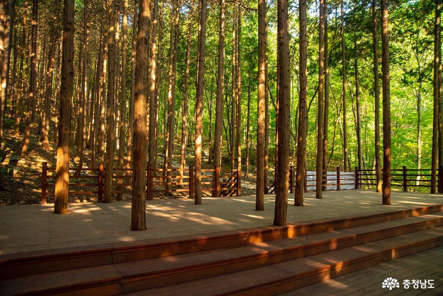 편백나무숲에서의 편안한 휴식, 보령 성주산자연휴양림 7
