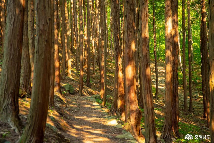 편백나무숲에서의 편안한 휴식, 보령 성주산자연휴양림 8