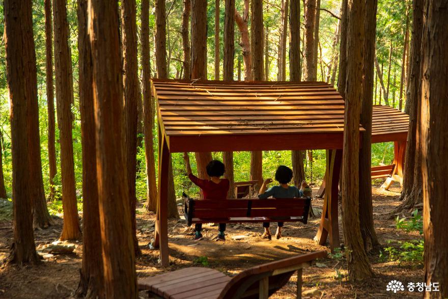편백나무숲에서의 편안한 휴식, 보령 성주산자연휴양림 10