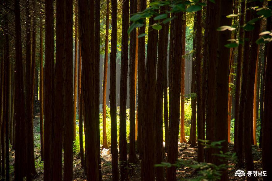 편백나무숲에서의 편안한 휴식, 보령 성주산자연휴양림 11