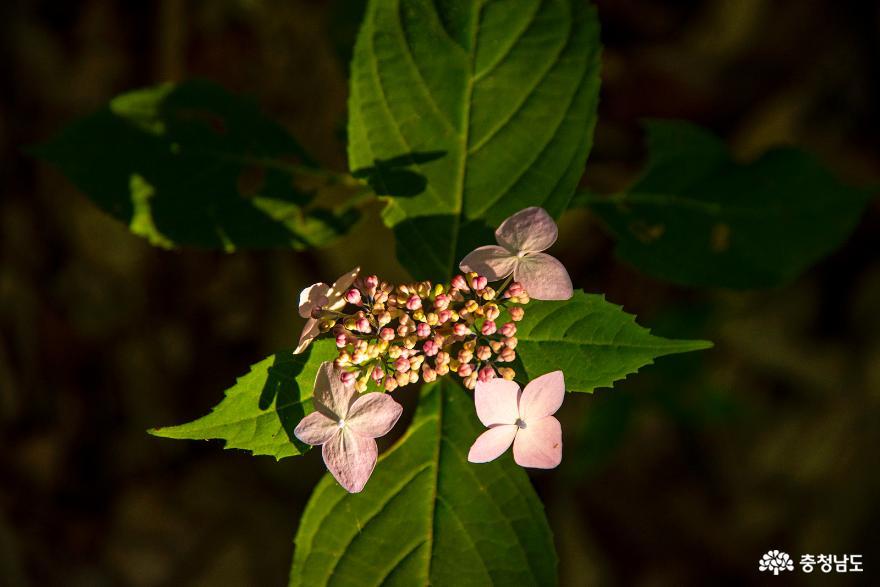 편백나무숲에서의 편안한 휴식, 보령 성주산자연휴양림 12
