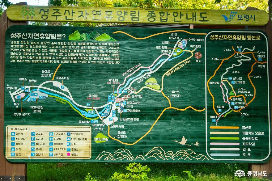 편백나무숲에서의 편안한 휴식, 보령 성주산자연휴양림 1