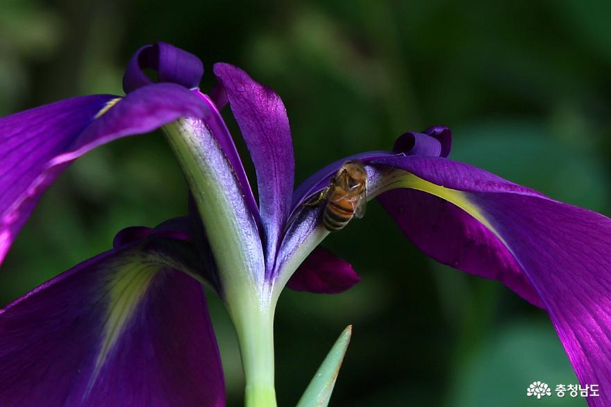 들꽃 향기 맡으며 산책하기 좋은 천안 식물원 들꽃세상
