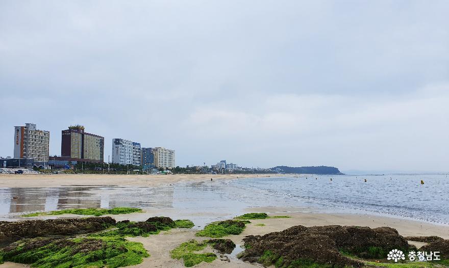 충남 여름휴가 1번지 대천해수욕장