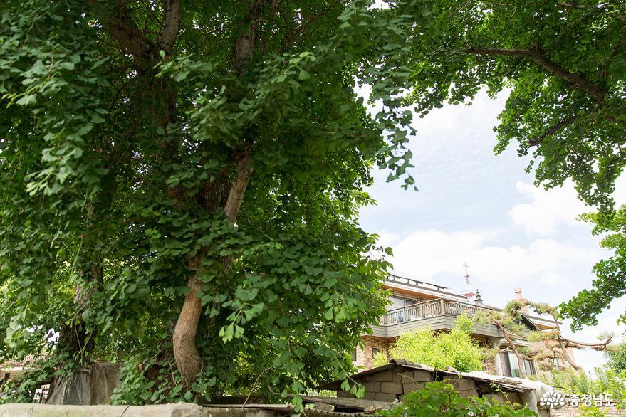 스토리가 있는 공주 이인벽화마을 사진
