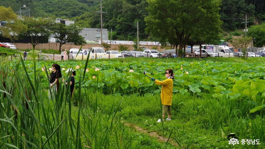 정안천 연못을 즐기는 시민
