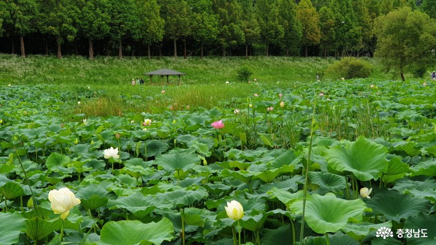 정안천 연못