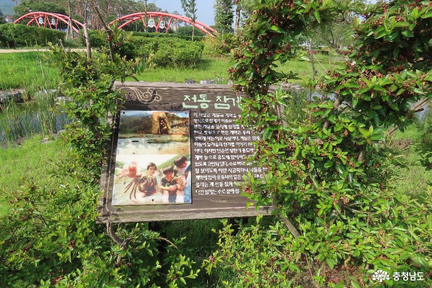 청양 지천생태공원에서 만난 전통참게 이야기