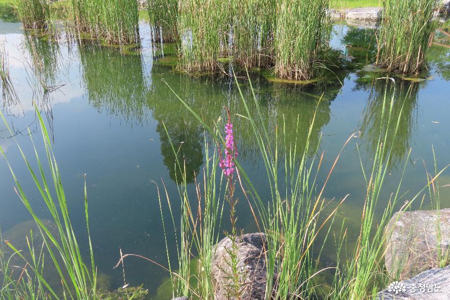 충남 생태공원 탐방, 청양 지천생태공원 사진