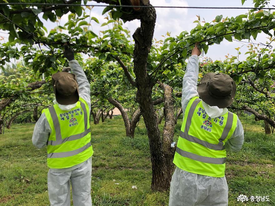 사과·배 농가 대상 과수화상병 발생조사