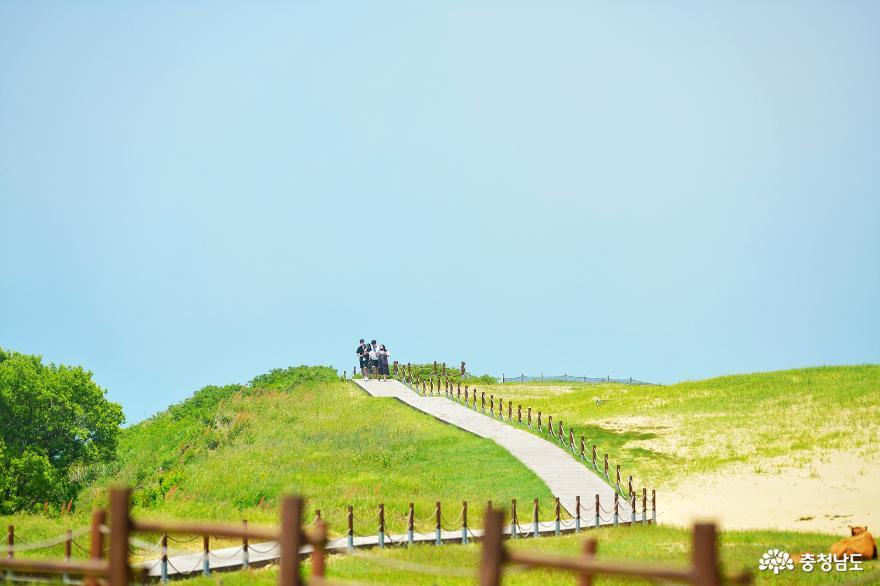 풍경이 아름다운 힐링여행지 신두리해수욕장과 신두리사구 사진