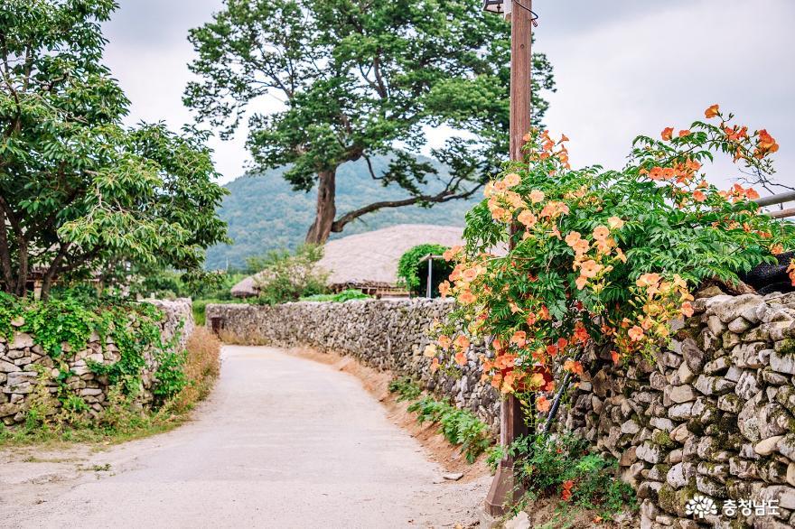 연꽃, 능소화 피는 여름 외암민속마을 8