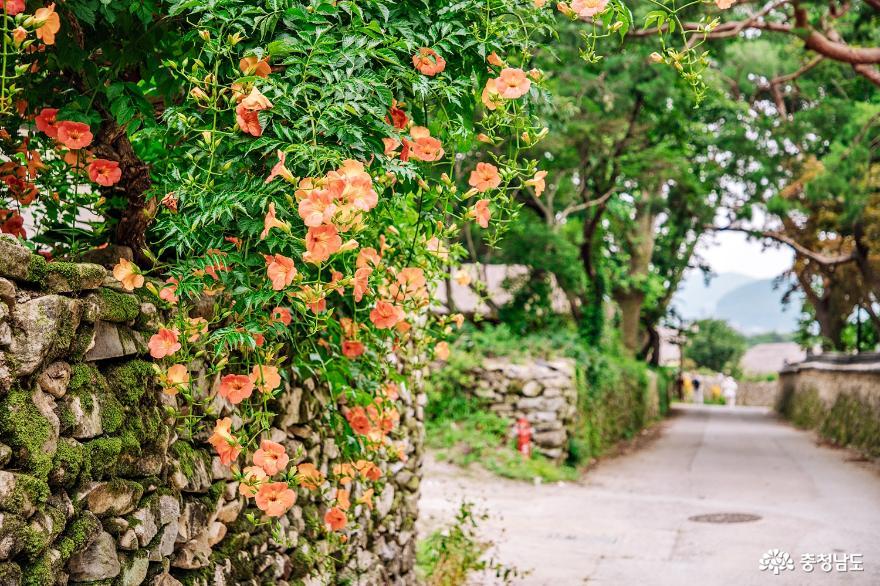 연꽃, 능소화 피는 여름 외암민속마을 10