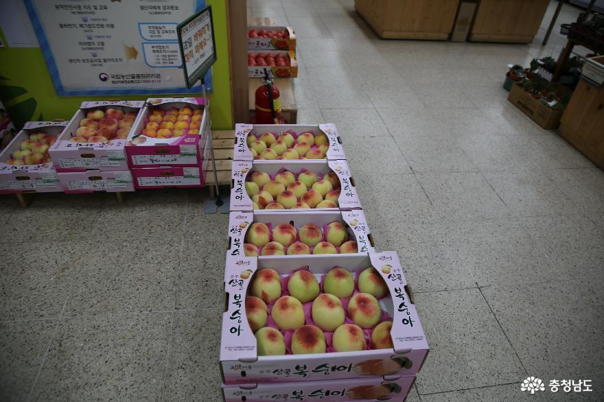 공주 로컬푸드직매장에서 여름과일 구입해 봐요 6