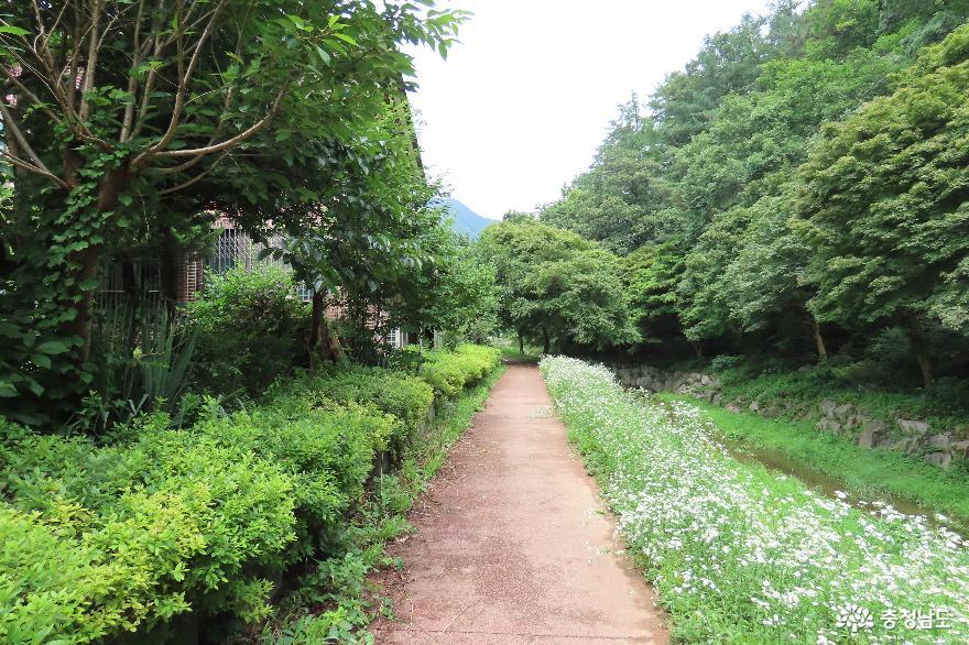 7월 숲길 풍경, 예산 금오산