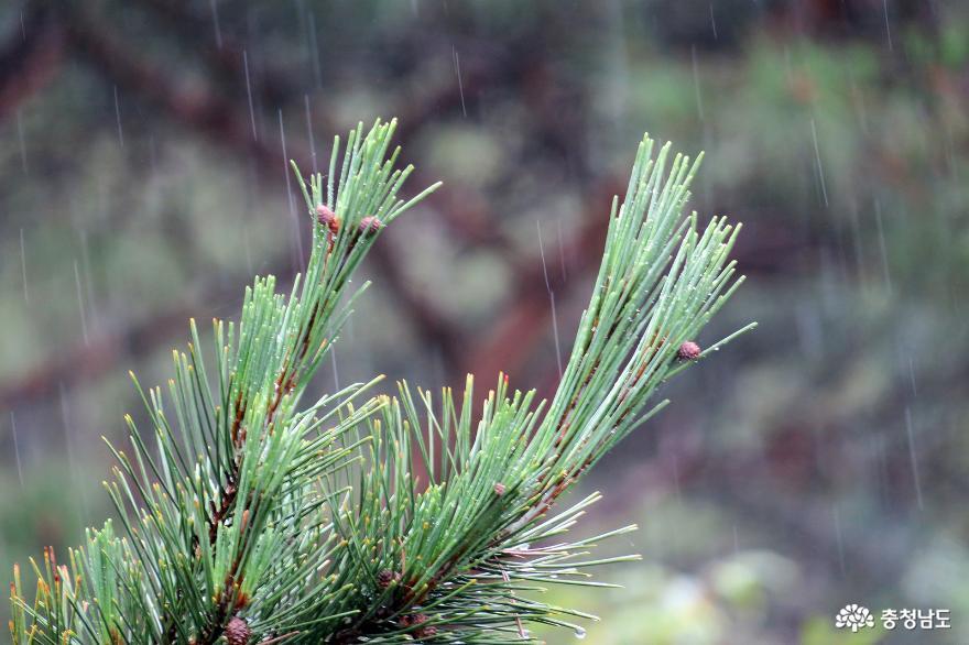 비오는 날 부여 부소산 낙화암과 고란사에서 사진