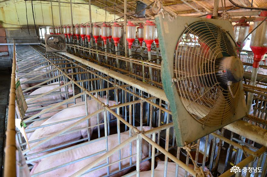 홍성군, 돼지FTA 피해보전직불금 및 폐업지원 신청