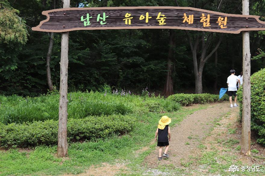 유아와 가볼만한 아산 남산 유아숲 체험원