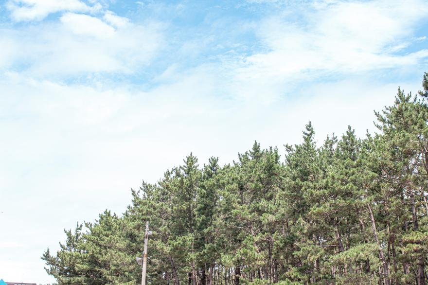 태안국립공원 기지포해안사구 3
