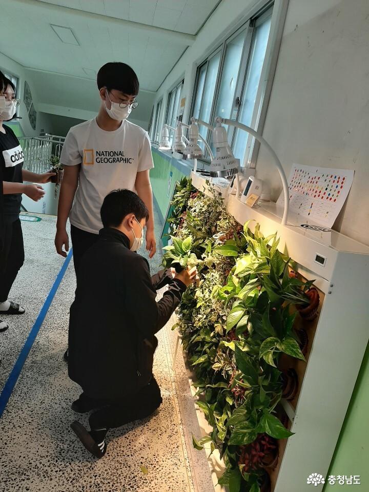 당진중학교에 식물공기청정기 바이오월이 설치되었어요 9