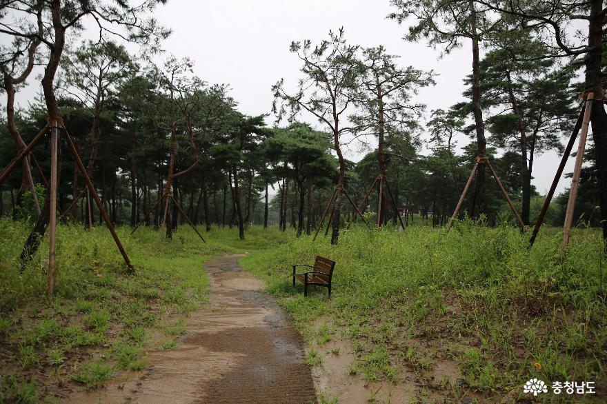 백제의 숨결을 느껴볼 수 있는 비 오는 날의 고마나루 사진