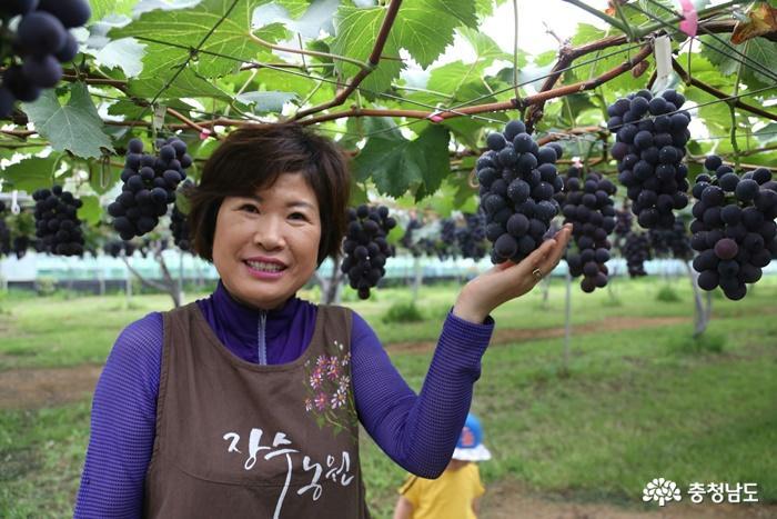 [코로나19 클린사업장 탐방] 천송이 포도나무 자랑하는 '장수포도농원' 1