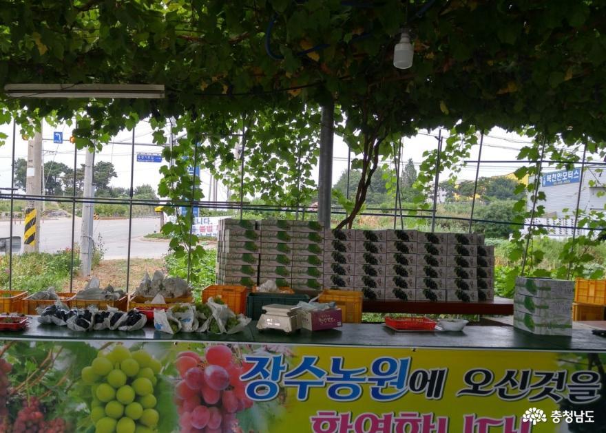 [코로나19 클린사업장 탐방] 천송이 포도나무 자랑하는 '장수포도농원' 2